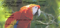 parrot gift certificate