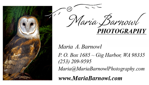 Maria barnowl photography contact us business card reheart Images
