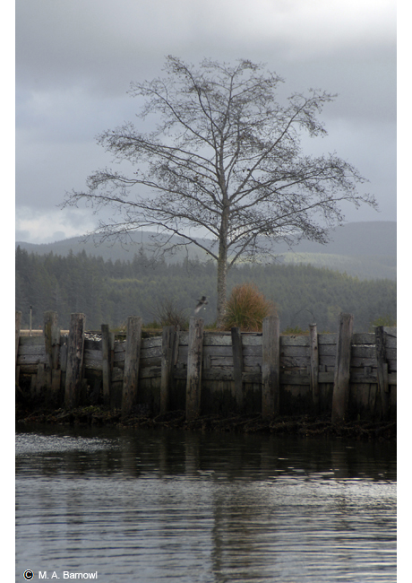 Willapa Bay Foggy Afternoon
