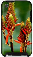 Western Coral Bean iPhone case